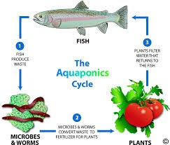 The Aquaponics Cycle